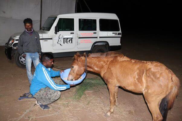 animal rahat feeds a pony in india