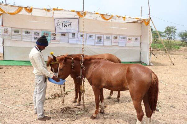 ponies eat at an animal rahat rest station in india