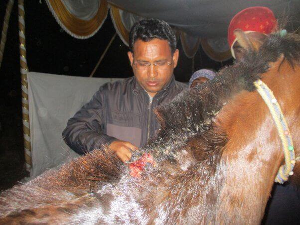 animal rahat vet treats injured pony