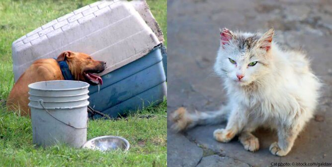 Pledge Not to Leave Animal Companions Outside