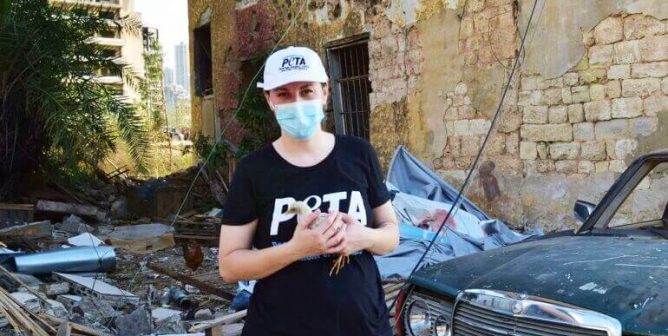 PETA U.K. and Local Groups Rush to Aid Animals in Beirut