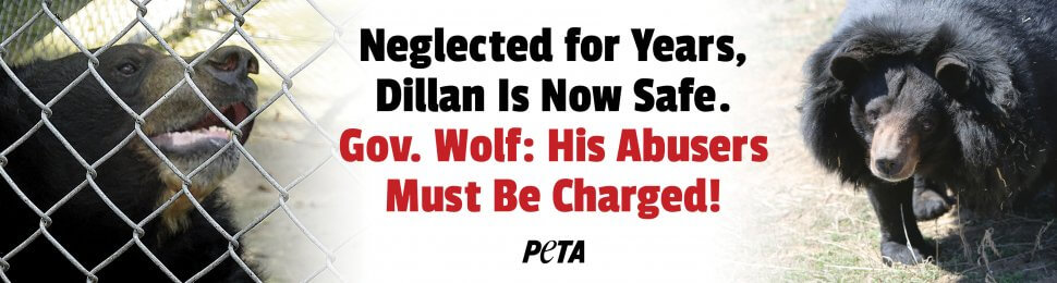 Neglected For Years, Dillan Is Now Safe