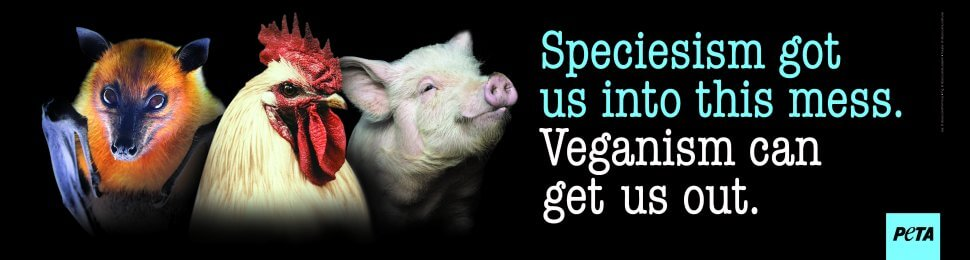 Speciesism Got Us Into This Mess. Veganism Can Get Us Out