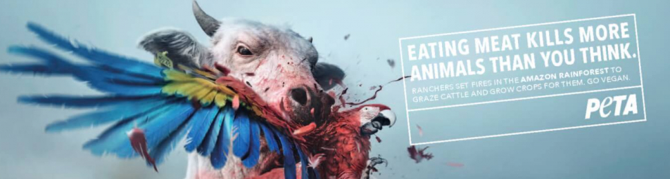 Eating Meat Kills More Animals Than You Think