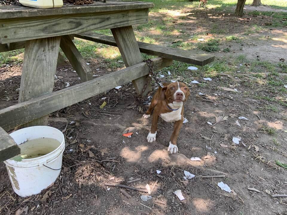 PETA Helping Dog