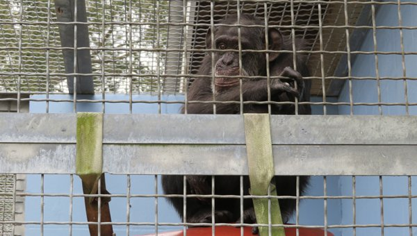 Primates Are Suffering in a Fake Sanctuary—Take Action Now!