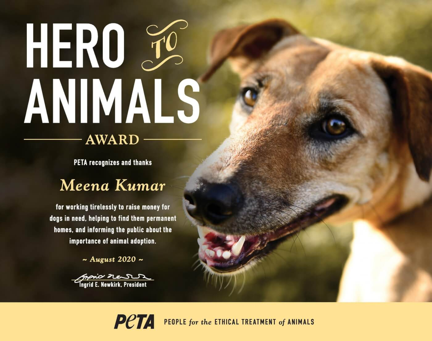 Hero to animals - Meena Kumar