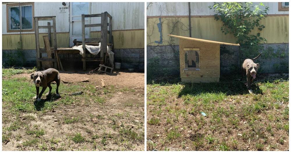PETA Doghouses