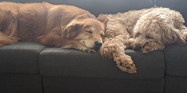 Mingo and her brother napping on couch