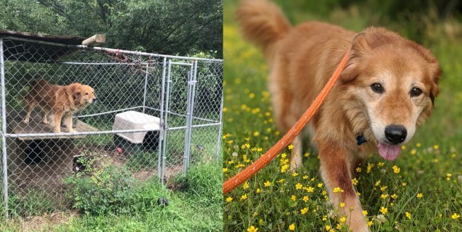 After 7+ Years in a Chain-Link Prison, Mingo Is Living Her Best Life