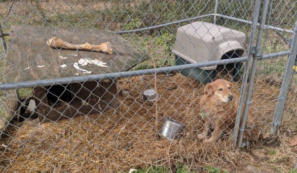 Senior dog Mingo lived in this tiny pen for years before PETA rescued her