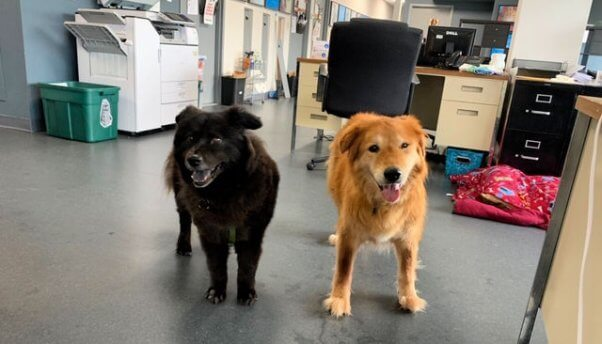 PETA rescues Mingo and Edith bonding at the office