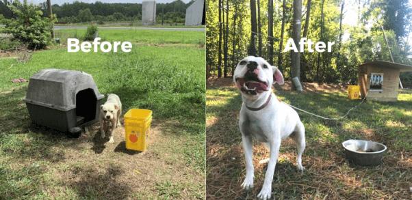 Neva Receives a New PETA Doghouse to Beat the Summer Heat