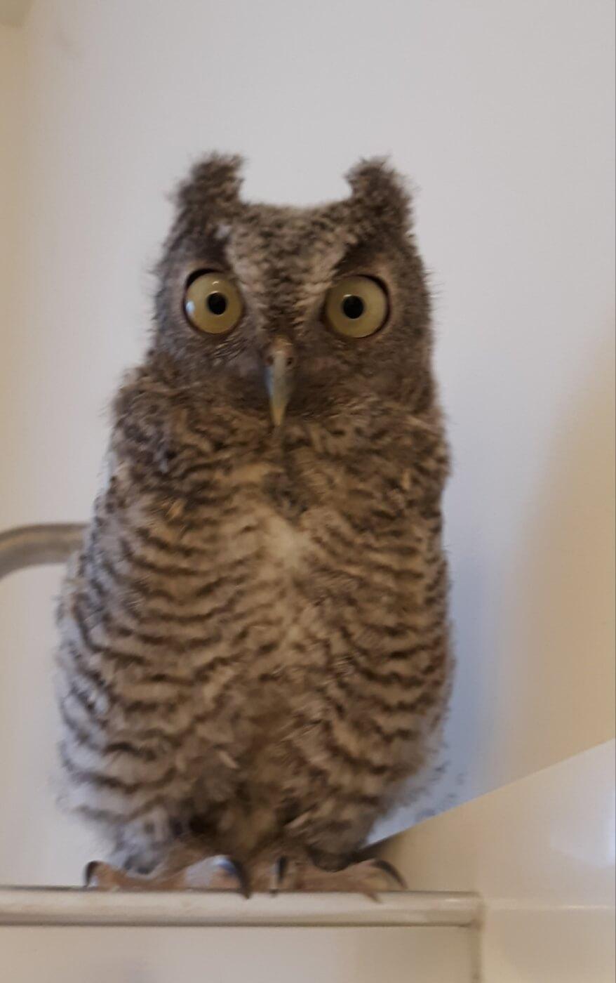PETA Helps Owl