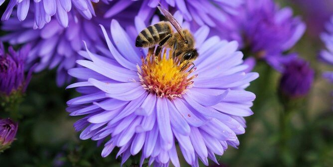 Is It OK to Eat Honey, Royal Jelly, and Bee Pollen?