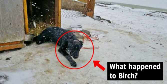 VIDEO: Iditarod Musher Gets Shifty When Police Ask About Dogs' Well-Being