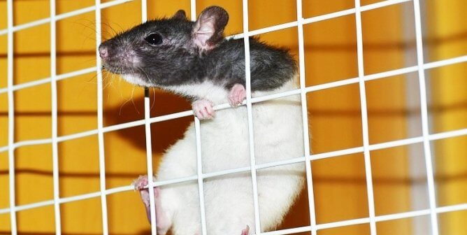 Food Companies Kill Animals in Taiwanese Labs for Health Marketing Claims