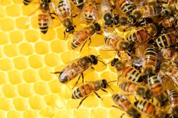 interesting bee facts bee hive honeycomb