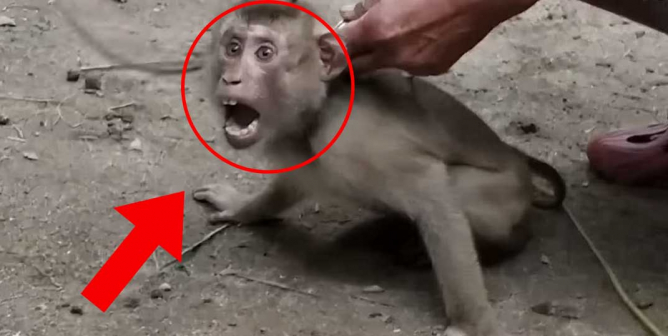 Tell Walmart to Stop Selling Coconut Milk Brands That Abuse Monkeys