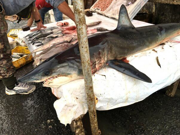 What Is 'Bycatch'?