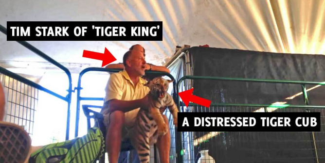 Tim Stark Loses PETA Lawsuit—Cub-Petting Industry Could Be Going Down With Him