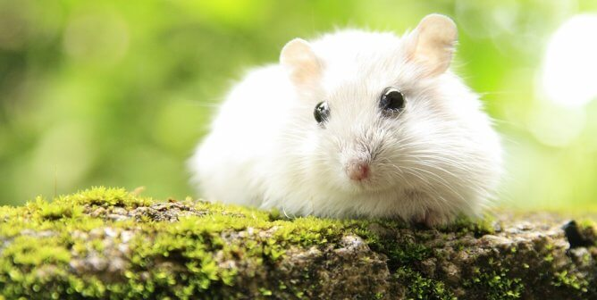 Scientists Worldwide Work to Fight COVID-19 Without Hurting Animals