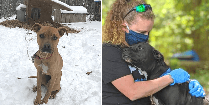 'Breaking the Chain' Started a Movement—Help Dogs in Your Neighborhood