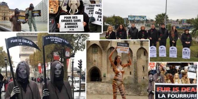 France Ends Mink Farming, Dolphinariums, and the Use of Animals in Circuses
