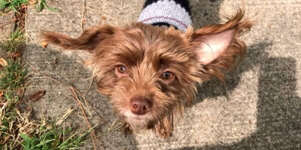 Wiley, an adoptable dog rescued by PETA