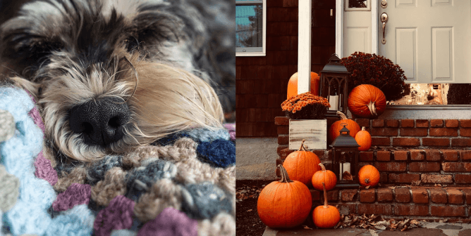 Keep Animals Safe This Halloween With These Tips
