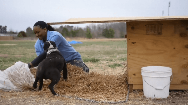 PETA fieldworker delivering a doghouse to a vulnerable dog