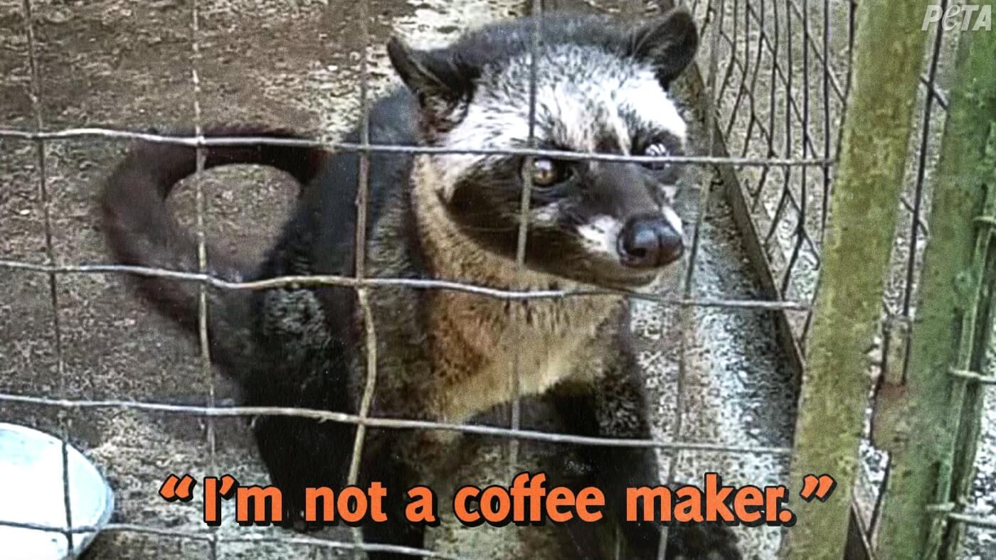 """Civet cat with """"I'm not a coffee maker"""" text"""