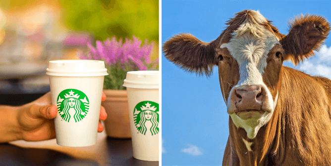 Former Starbucks Barista Roasts Company in Open Letter for Vegan Milk Surcharge
