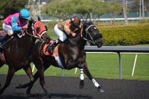 horseracing jockeys with whips