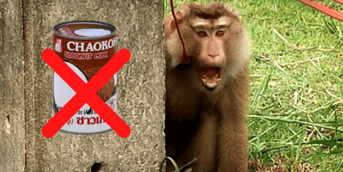 Associated Food Stores Profits From Exploited Monkeys—Take Action!