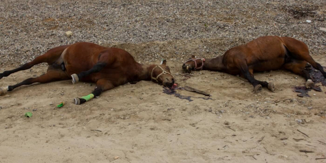 GRAPHIC: Horses Killed, Dumped on Bike Trail in Los Angeles County