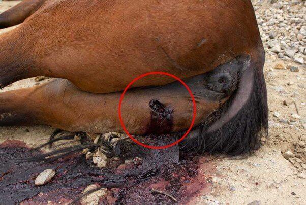 horses killed San Gabriel Valley Bike Trail