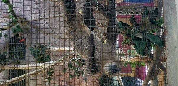 a sloth in a cage at a SeaQuest aquarium