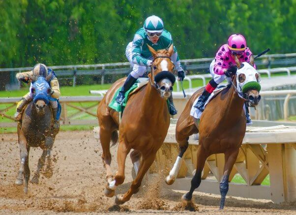 Three horses are forced to race