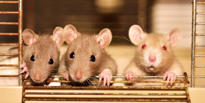 PETA Calls For Paradigm Shift in Scientific Community to Face COVID-19: End Animal Tests