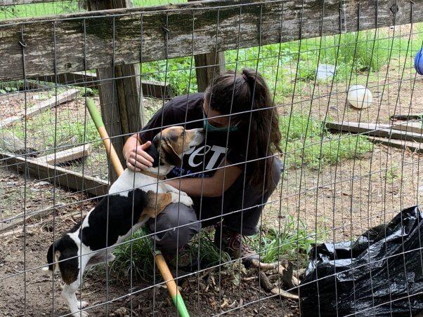 Bean getting love from PETA fieldworker