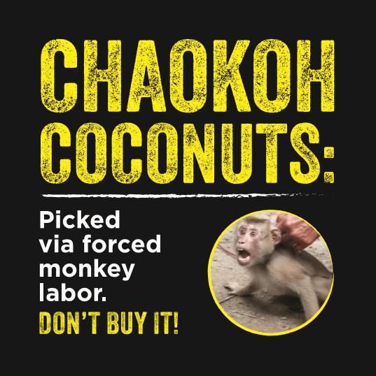 Chaokoh Coconut Milk Stickers