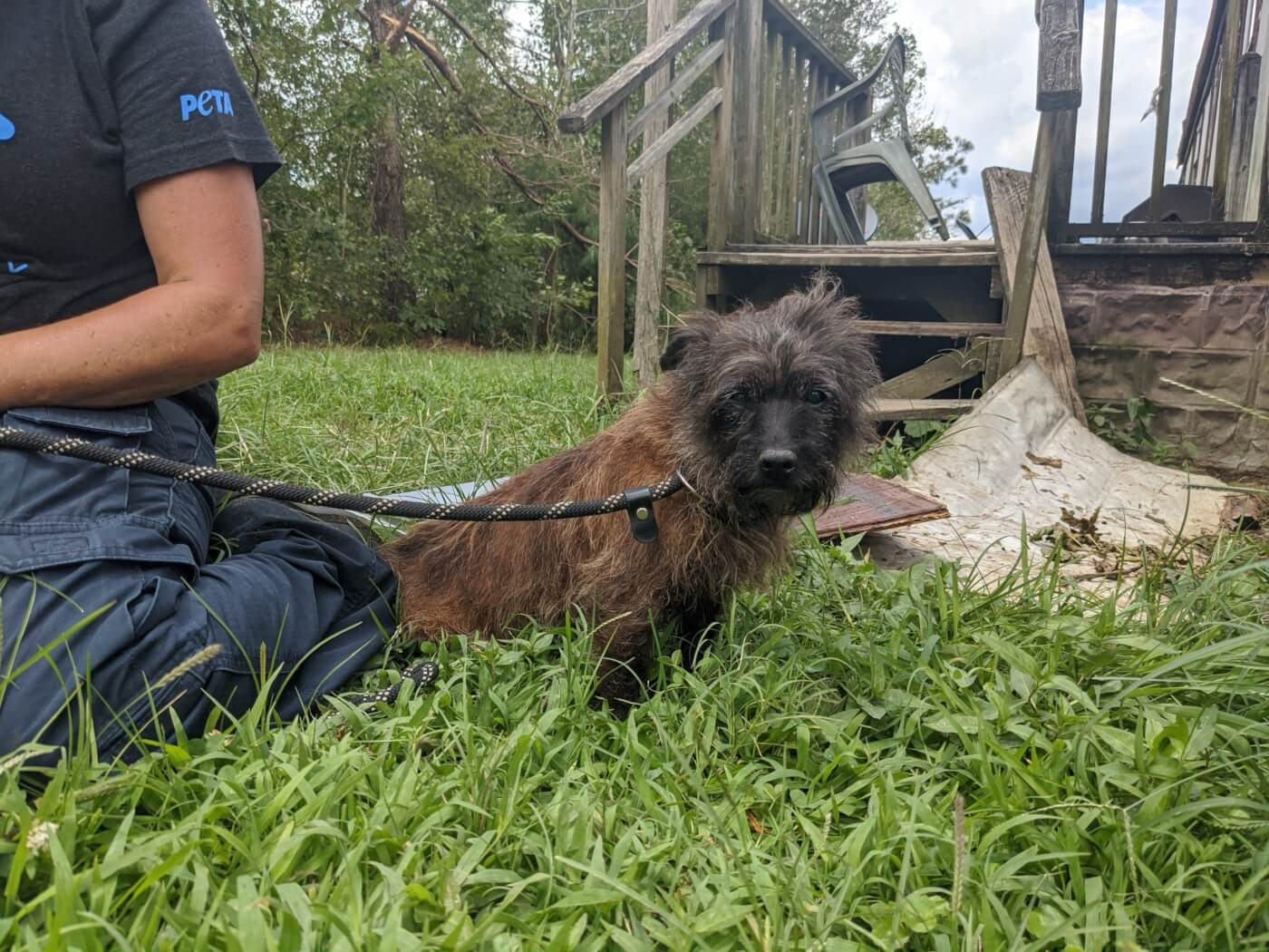 This little dog was recovered from the debris of a tornado by a team of PETA fieldworkers