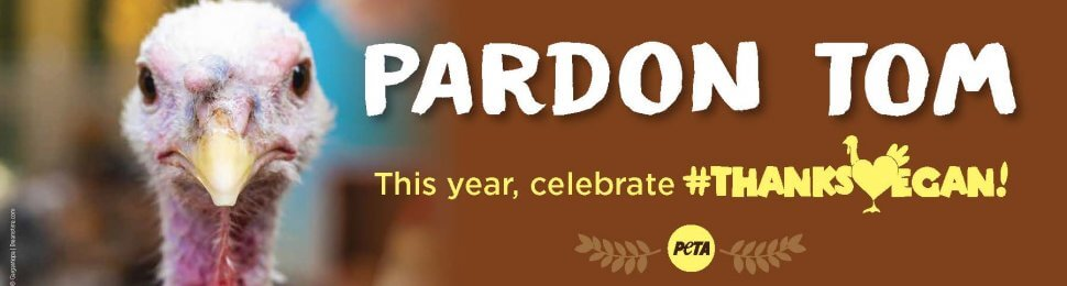 Pardon Tom. This Year, Celebrate #ThanksVegan!