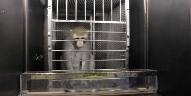 Dr. Biruté Galdikas Tells NIH: Monkey Brain-Damage Surgeries Are 'Pointless,' Must End