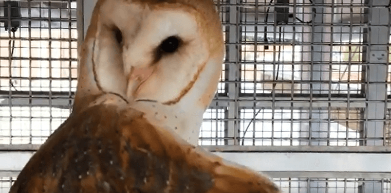 """PETA Files Lawsuit Against Federal Government as """"Next Friend"""" to Barn Owls"""