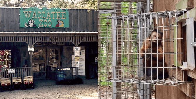 Help Animals Who Are Going Insane at Waccatee Zoo   Take Action Now!