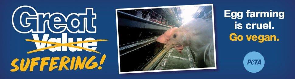 Great Suffering! Egg Farming Is Cruel. Go Vegan