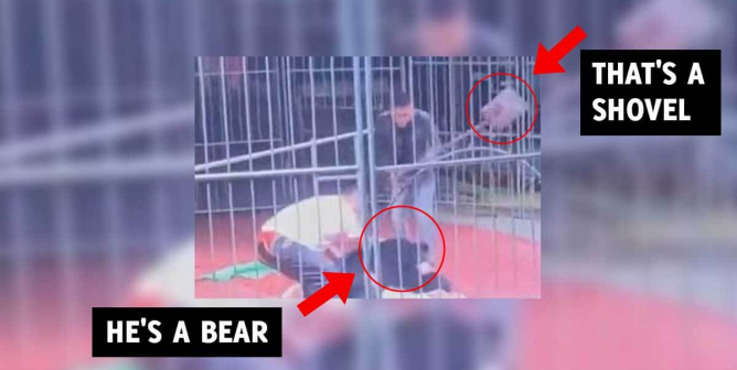 WATCH: Bear Snaps at Handler Mid-Circus, Is Beaten With a Shovel