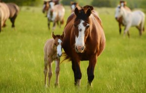 Brown and white horses stand together in field
